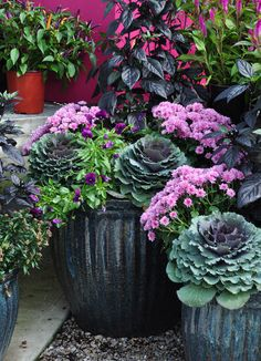 Fall container purples