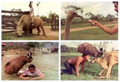 'Pablo was not worried about money. From 1982 to 1986 he was may be the richest man in the world.'    Alberto Villamizar, politician    The animals of Hacienda Napoles, Pablo's country estate. Pablo paid US $5 million for the animals.    Photographs from El Chino's archives