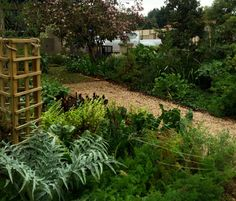 #urbanfarm just 6months since it was planted up. The range of food, flowers blooming mid winter and general abundance was so mood lifting today.