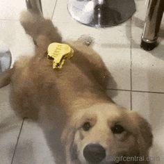 Classic Dog Prank
