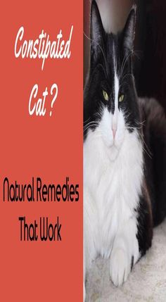 Constipation In Cats Effective Natural Remedies Kitty Constipation Problem, Cat Eye Infection, Cat Health Care, Cat Skin, Best Cat Food, Sick Cat, Kitty Images