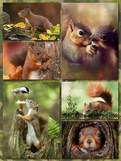 Autumn, Squirrels, forest collage. 19102016 Eekhoorntjes Herfst