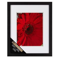 Preserve a cherished photograph or artwork in this distinctive wall frame. The double white mat makes your photo or image look extra special.