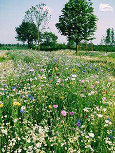 English meadow countryside garden with wildflowers Meadow Garden, Dream Garden, Wild Flower Meadow, Wild Flowers, Des Fleurs Pour Algernon, Parcs, Beautiful Gardens, Beautiful Birds, Land Scape