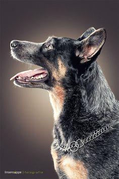 Furry Dog Portraits by Daniel Sadlowski
