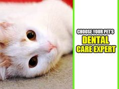 Take care of your pet's oral health. Visit a reliable vet and learn which treatments you can implement. Also, take advantage of different dental care services and home care programs. Teeth Cleaning, Oral Health, Dental Care, Take Care Of Yourself, Dentistry, Your Pet, Dog Cat, Pets, Dental Caps