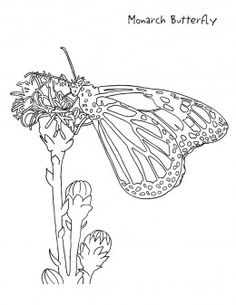 backyard animals and nature coloring books free coloring pages - Rainforest Insects Coloring Pages