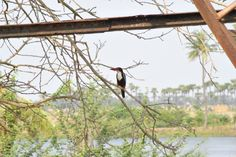 King Fisher... my bro's photography...