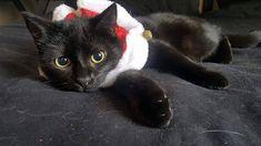 #meow #blackcat #christmas #cat #catsofinstagram #model Cats Of Instagram, Model, Christmas, Animals, Image, Xmas, Animales, Animaux, Navidad