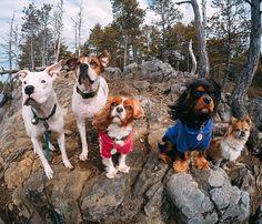 #dogsquadgoals