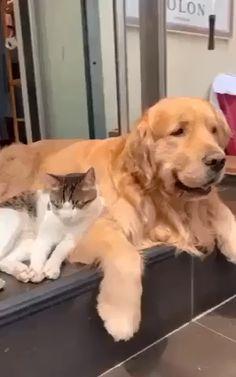#love #dog #cat #loved #cutedog #cutecat #dogvideos #cuteanimals #catvideos #dogbreeds #animalvideos Funny Dog Videos, Funny Dogs, Funny Puppies, Mom Funny, Funny Babies, Cat And Dog Videos, Maltese Puppies, Puppies Tips, Best Cat Videos