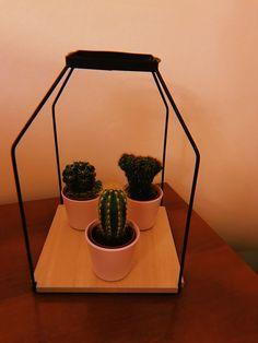 #cactus #babies #home #homedecor  #inspiration #bucharest