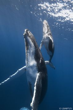 Les plus belles Photographies de Baleines