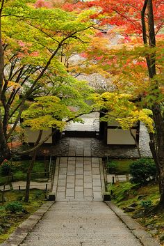Path to Jojakko-ji Temple | Kyoto #japan #Kyoto #travel
