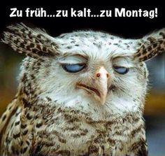 funpot: Montag.png von Niklas