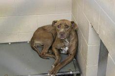 Georgia Urgent Animals Need You - Please Share - Foster - Adopt - Sponsor - Please