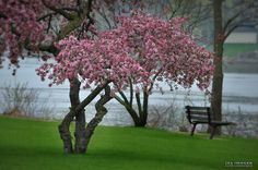 River Bench in Spring by JALimager, via Flickr     ew