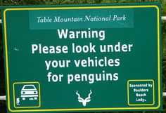 What IS that penguin doing under the car? Fixing the brakes? Having a snooze?