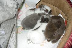 First litter May 2009.