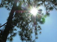 Aimee Copeland: GOOD! and getting better Georgia sun in a pine grove