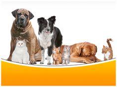 rezultat iskanja slik za dogs powerpoint templates free