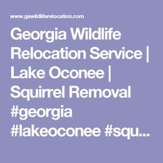 Georgia Wildlife Relocation Service | Lake Oconee | Squirrel Removal  #georgia #lakeoconee #squirrel #bat #removal #wildlife #care #georgiastate #putnam #greene #trapping #service