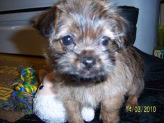 Shiloh, my dog, at 8 weeks