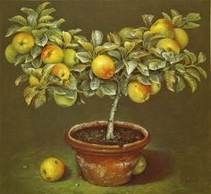 Apple Tree in Terracotta Pot by  Jose Escofet