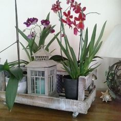 Cagette blanchie - jardin d'hiver - décoration maison de famille
