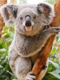 australian Photos - authorbryanblake.blogspot.com