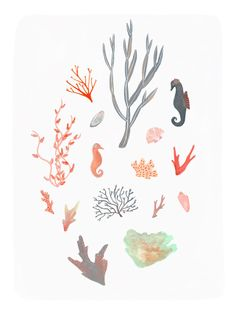 Coral - Alice Ferrow Illustration
