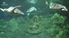 Take live a look at the life of the sea turtle. (Use the keyword wesp333 on Google for my blog)