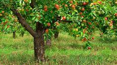 beplanting onder de appelboom