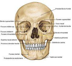 Sobota Anatomia Crânio - Portal de Aulas de Radiologia - raiosxbr.com