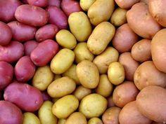 Девять советов для высокого урожая картофеля  | Дачники