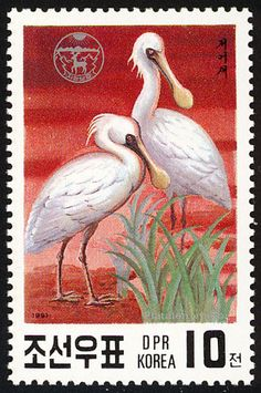Black-faced Spoonbill stamps - mainly images - gallery format