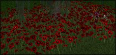 photo poppies1_zps9be312cf.png