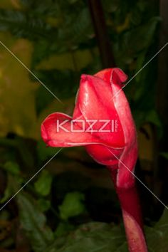 close-up image of a flower. - Detailed view of a flower.