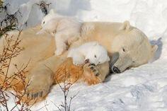 連休が終わろうともかわいい動物画像:ハムスター速報