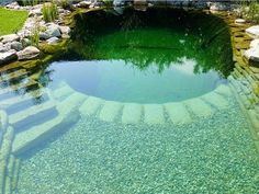 Having a pool sounds awesome especially if you are working with the best backyard pool landscaping ideas there is. How you design a proper backyard with a pool matters. Swimming Pool Pond, Natural Swimming Ponds, Natural Pond, Backyard Pool Designs, Ponds Backyard, Pool Landscaping, Piscine Diy, Small Pools, Plunge Pool