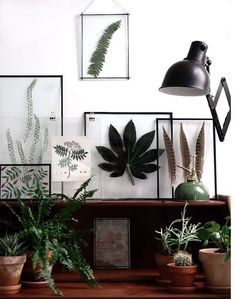 plant desk display, with framed plants and potted plants, wooden desk.