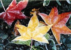 """""""Fall leaves with frost."""" (Courtesy verdoonie/myBudgetTravel)"""