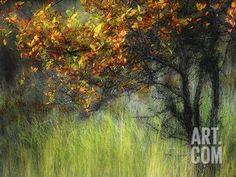 Bittersweet Photographic Print by Ursula Abresch at Art.com