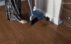 This darned kitty litter gets everywhere! https://plus.google.com/115485979219209097599/posts/E3BFEr18P9X