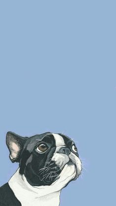 Boston Terrier (nonsport) AKC Popularity 21 Size Color Black+Whi… is part of pencil-drawings - pencil-drawings Cute Dog Wallpaper, Tier Wallpaper, Animal Wallpaper, French Bulldog Wallpaper, French Bulldog Art, Wallpaper Tumblrs, Wallpaper Backgrounds, Iphone Wallpaper, Boston Terriers