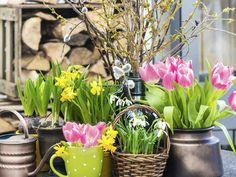 Kauniit keväiset asetelmat tehdään krookuksista, narsisseista ja pajun- tai koivunoksista.