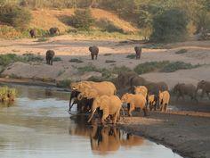 #krugerpark #wilderness #elephant