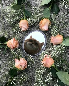 Ideas For Cats Aesthetic Flowers Animals And Pets, Baby Animals, Cute Animals, Crazy Cat Lady, Crazy Cats, I Love Cats, Cool Cats, Cat Aesthetic, Spring Aesthetic
