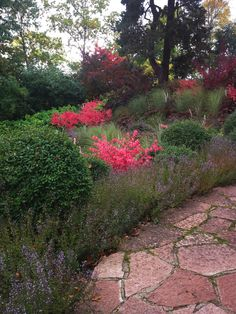 Planting with bright autumncolors