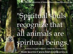 Spiritual Souls Recognize That All Animals Are Spiritual Beings - Animal Quote